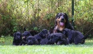 B's und ihre neuen Familien